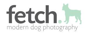 fetch blog - modern dog photography - dallas, texas