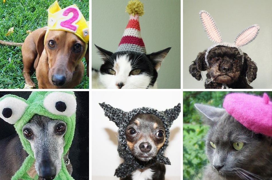 Pets In Hats