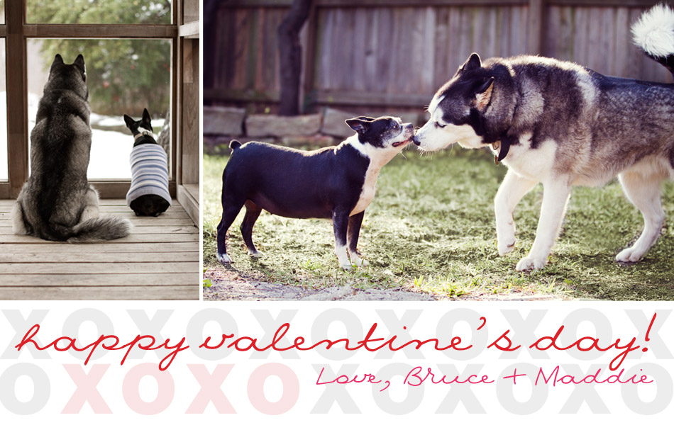 LE TERRIER DE BOSTON - Page 10 Valentinesday