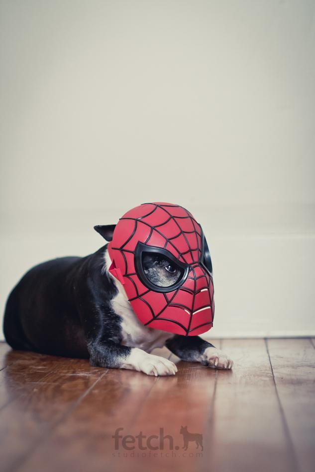 spidermaddie